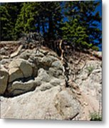 Alpine Pine Hangs On For Life Metal Print
