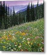 Alpine Wildflower Meadow, Mount Metal Print