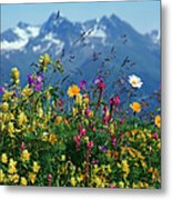 Alpine Wildflowers Metal Print