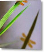 Amberwing Reflection Metal Print