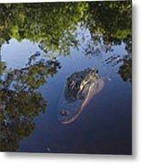 American Alligator In The Okefenokee Swamp Metal Print