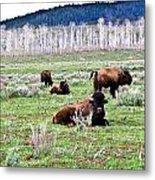 American Buffalo 16 Metal Print