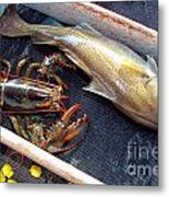 American Lobster And Cod Caught Off Chatham On Cape Cod Metal Print