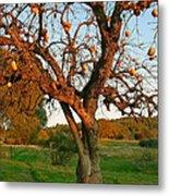 American Persimmon Tree Metal Print