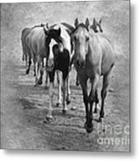 American Quarter Horse Herd In Black And White Metal Print