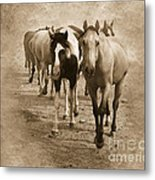 American Quarter Horse Herd In Sepia Metal Print by Betty LaRue