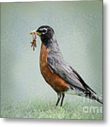 American Robin With Worms Metal Print