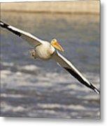 American White Pelican Pelecanus Metal Print