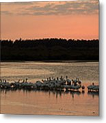 American White Pelicans At Sunset Metal Print