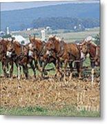Amish Working Team  Metal Print by Louise Peardon