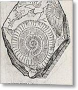 Ammonite Fossil, 16th Century Metal Print