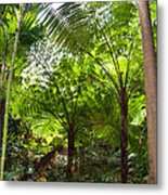Among The Tree Ferns Metal Print