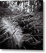 Among Thorns Metal Print