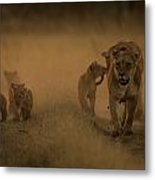 An African Lioness And Cubs, Panthera Metal Print