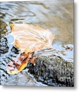 An Autumn Day's Rest Metal Print