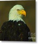 An Eagle Close Up  Metal Print