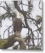 An Eagle Perched  Metal Print