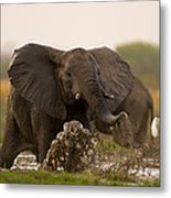 An Elephant Charges When Startled Metal Print