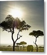 An Elephant Walks Among The Trees Kenya Metal Print