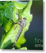 An Insect Resting  Metal Print