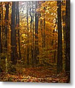 An Inspired Stroll Through The Forest Metal Print by Inspired Nature Photography Fine Art Photography