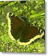 An October Butterfly  Metal Print
