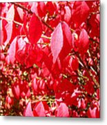 An Ohhh Fall Color Metal Print
