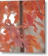 An Orange Fall Tree With Words Metal Print