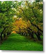 An Orchard Row  Metal Print