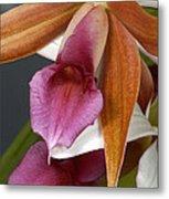 An Orchid, Probably A Cattleya Hybrid Metal Print
