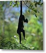 An Unidentified Monkey Hangs Metal Print