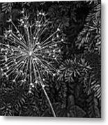 Anatomy Of A Flower Monochrome 2 Metal Print