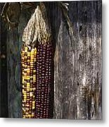 Ancient Corn Metal Print
