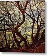 Ancient Winter Tree Metal Print