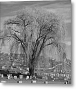 And The Willow Tree Weeps Metal Print
