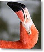 Angle Of A Flamingo Side B Metal Print
