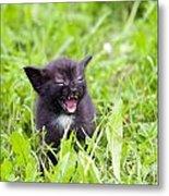 Angry Kitten Metal Print