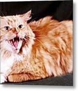 Angry Orange Tabby Metal Print