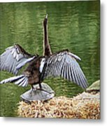 Anhinga On Turtle Metal Print
