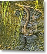 Anhinga's Catch Of The Day Metal Print