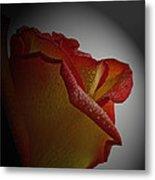 Anniversary Rose Metal Print