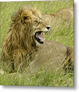 Annoyed Metal Print