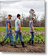 Another Cotton Pickin' Day Metal Print