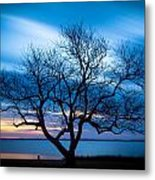 Another Favorite Tree Metal Print