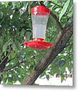 Another Hummingbird Metal Print