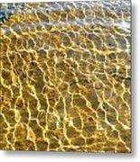 Anphibian Agua Metal Print
