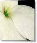 Ant On White Flower Metal Print
