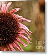 Antique Cone Flower Metal Print