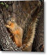 Apache Fox Squirrel Metal Print