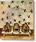Apiculture-beekeeping-14th Century Metal Print by Science Source